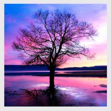 Купить Hoff Репродукция 50х50 см Дерево