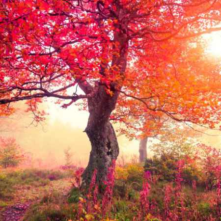 Купить Hoff Репродукция 40х60 см Осенний пейзаж
