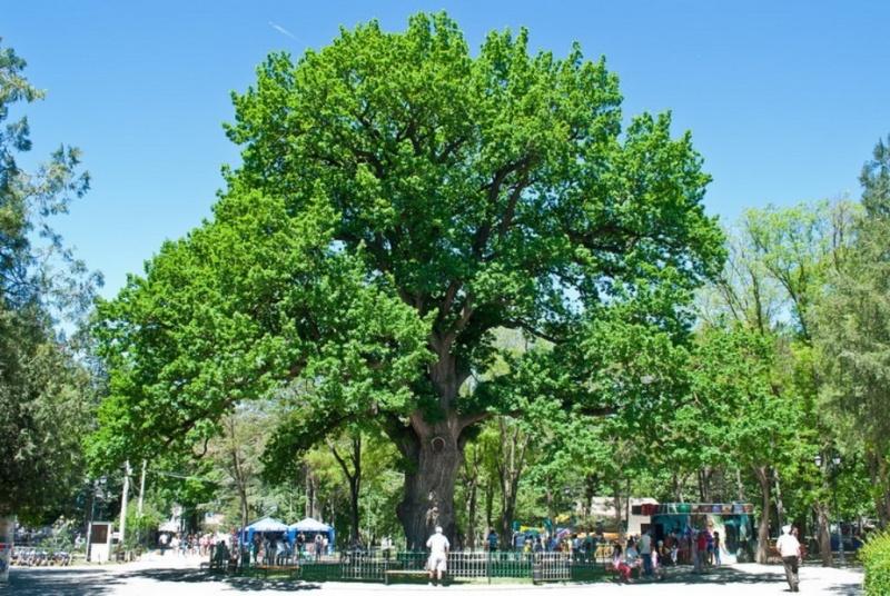 Городские парки Симферополя
